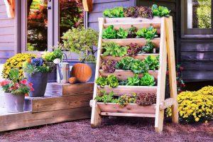 Kur įsigyti sėklų bei augalų